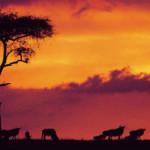 Kenya apprehends threats to tourism sector