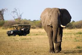 East African tourism