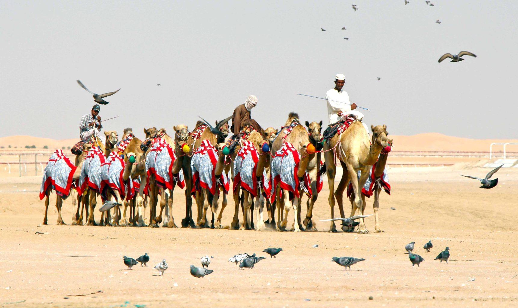 Al Dhafra Festival1