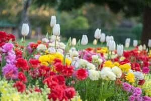31st Garden Tourism Festival
