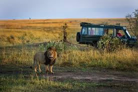 Global luxury safari tourism market is seeing a steady ...