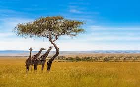 International tourism in South Africa