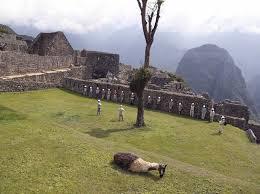 Peru suspends entry to Machu Picchu